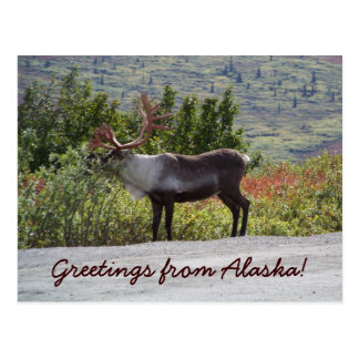 Greetings from Alaska! Postcard