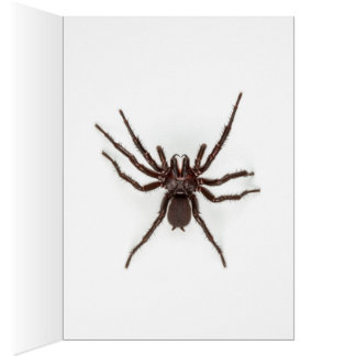 Greetings From Australia - Funnel-Web Spider Card