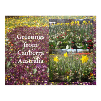 Greetings from Canberra Australia Postcard