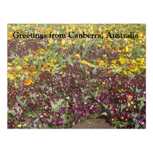 Greetings from Canberra, Australia Postcards