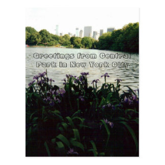 Greetings from Central Park in New York City Postcard