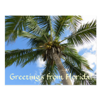 Greetings from FLorida / coconut palm tree Postcard
