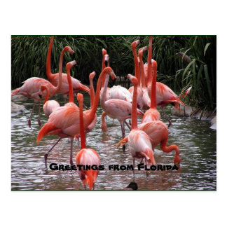 """Greetings from Florida,"" flamingos postcard"