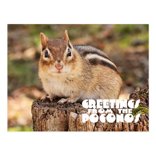 Greetings from the Poconos! Adorable Fat Chipmunk Postcard