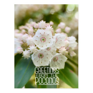 Greetings from the Poconos Mountain Laurel Postcard