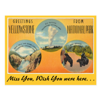Greetings from Yellowstone National Park Postcard