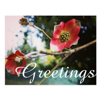 Greetings Postcard - Flowering Dogwood