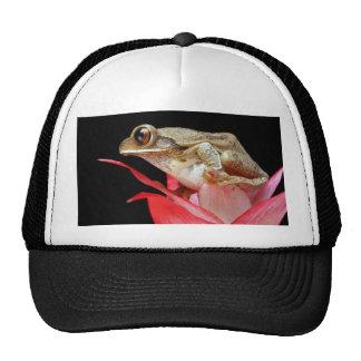 Grenouille mignonne sur le chapeau rouge de photo  casquette de camionneur