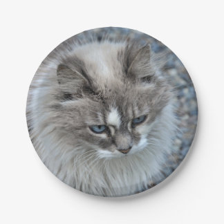 Grey and white cat 7 inch paper plate