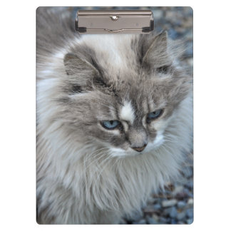 Grey and white fuzzy cat clipboard