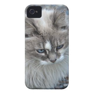 Grey and white kitty cat iPhone 4 Case-Mate case