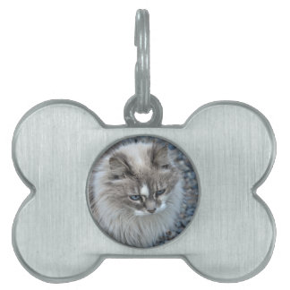 Grey and white kitty cat pet tag