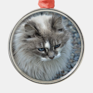 Grey and white kitty cat Silver-Colored round ornament