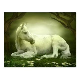 Grey Arabian Horse Postcard