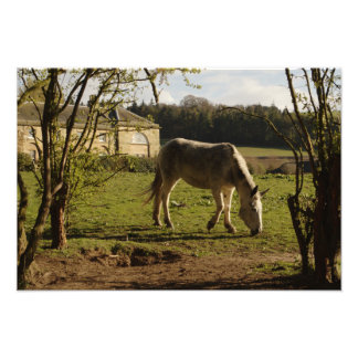 Grey At Tarvit Farm Photo Print