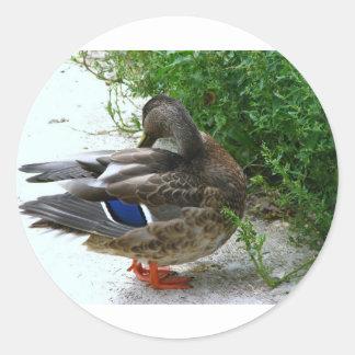 Grey Bird with Blue on Feather and Orange Feet Round Sticker