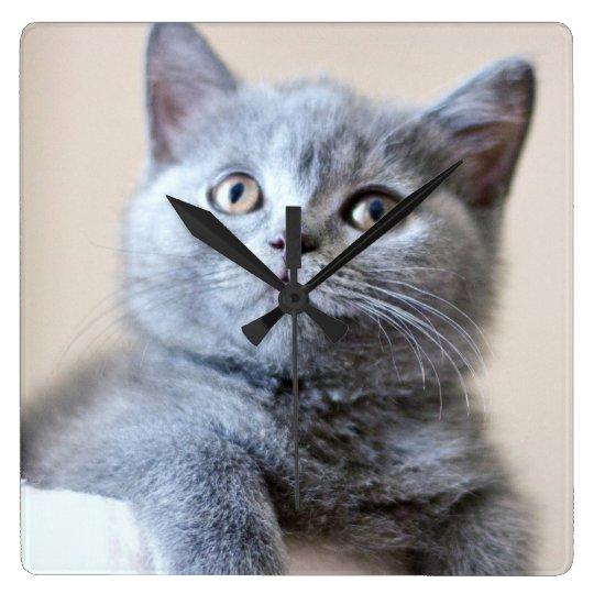 Grey British Shorthair Cat Square Wall Clock Zazzle Ca