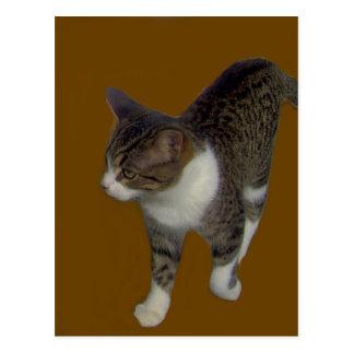 Grey Brown Cat Postcard