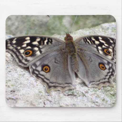 Grey Butterfly Colour Image - Mouspad Mouse Pads