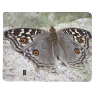 Grey Butterfly Colour Image - Pocket Journal