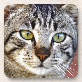 Grey cat beverage coaster