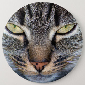 Grey Cat Face Closeup 6 Inch Round Button