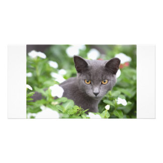 Grey cat in a garden photo card template