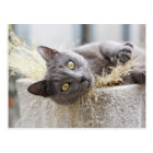 Grey Cat Lying in Pot, Olargues, Herault, France Postcard