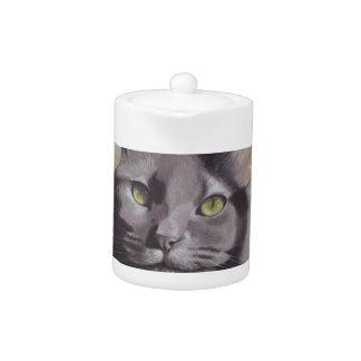 Grey Cat Pet Portrait