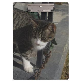 Grey Cat Stalking Clipboards