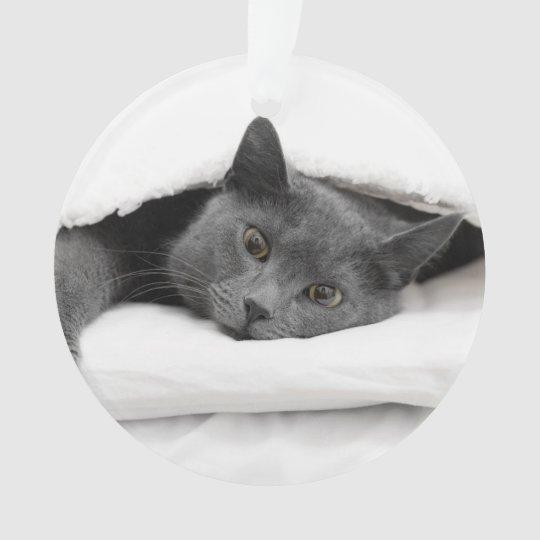 Grey Cat Under White Blanket