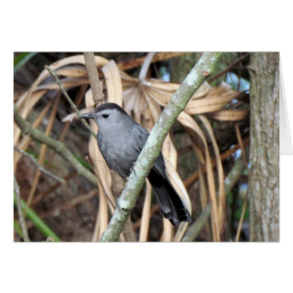 Grey Catbird Greeting Card