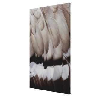 Grey Feather Design Close Up Canvas Print