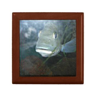 Grey fish gift box