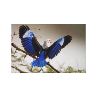 Grey-headed Kingfisher Canvas Print