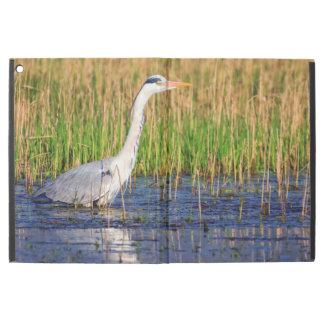 Grey heron, ardea cinerea, in a pond
