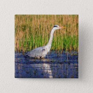 Grey heron, ardea cinerea, in a pond 2 inch square button