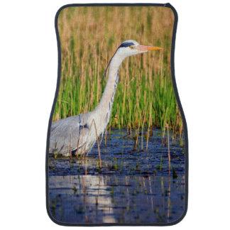 Grey heron, ardea cinerea, in a pond car mat