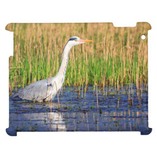 Grey heron, ardea cinerea, in a pond case for the iPad