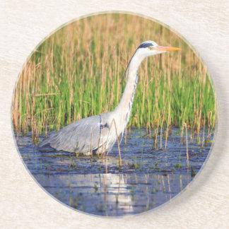 Grey heron, ardea cinerea, in a pond coaster