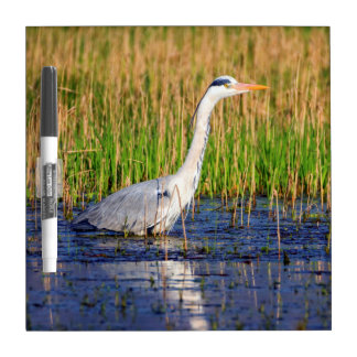 Grey heron, ardea cinerea, in a pond dry erase board