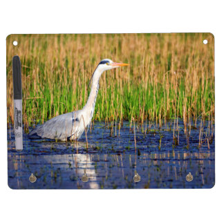 Grey heron, ardea cinerea, in a pond dry erase board with keychain holder