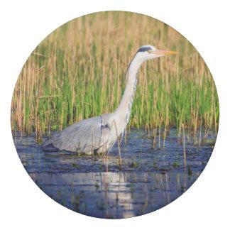 Grey heron, ardea cinerea, in a pond eraser
