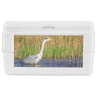Grey heron, ardea cinerea, in a pond ice chest