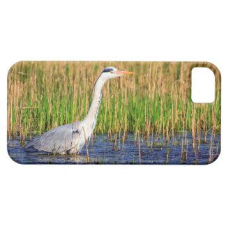 Grey heron, ardea cinerea, in a pond iPhone 5 cases