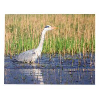 Grey heron, ardea cinerea, in a pond notepads