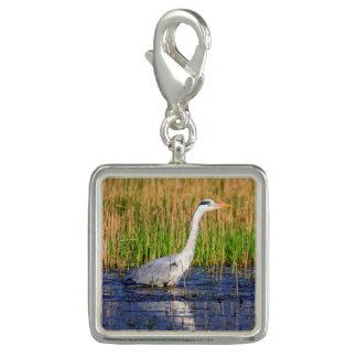 Grey heron, ardea cinerea, in a pond photo charm