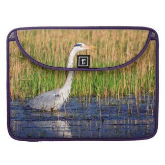 Grey heron, ardea cinerea, in a pond sleeve for MacBooks