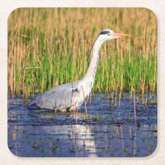 Grey heron, ardea cinerea, in a pond square paper coaster