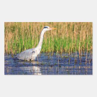 Grey heron, ardea cinerea, in a pond sticker